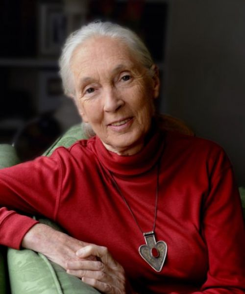 Photo representing Dr. Jane Goodall
